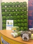 """Wall"" of  Hydroponic Butter Lettuce at Expo West in Anaheim, March 9, 2014"