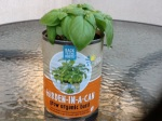 Day 18 - 8/04/15 Organic Basil