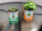 Day 21 - 8/07/15 Organic Basil and Cilantro