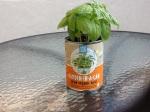 Day 24 - 8/10/15 Organic Basil