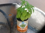 Day 33 - 8/19/15 Organic Basil