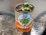 Day 12 - 7/29/15 Organic Basil